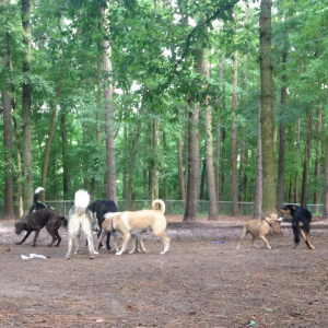 Carolina Pines Dog Park