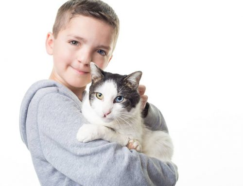 Bullied for how he looks, boy adopts a special cat who shares his differences