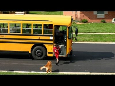 Dog waiting for bus