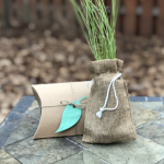 Biodegradable urn and seedling